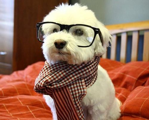 Lavish Treatscute Dogs Dressed Up For Halloween Lavish Treats